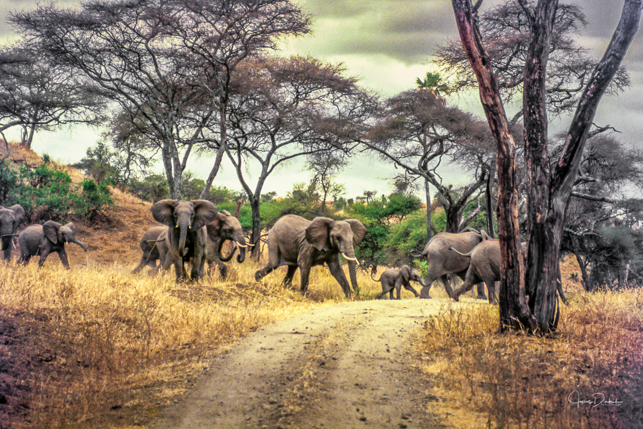 Rush hour in the bush.