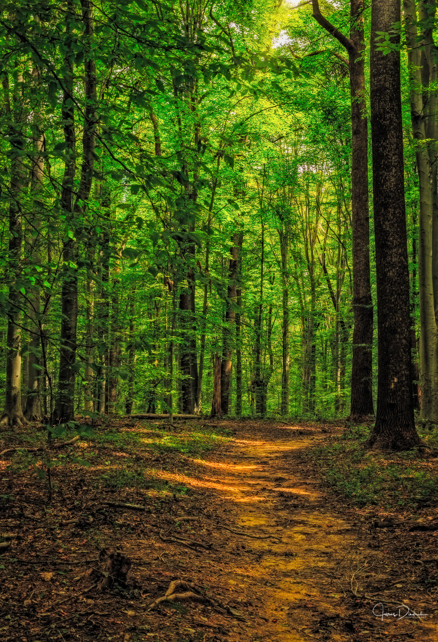 Seneca Woods