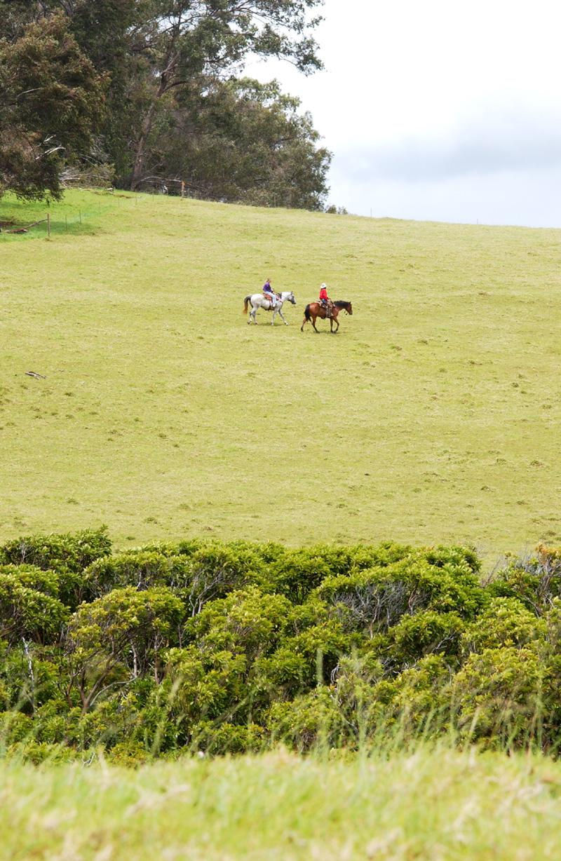 DSC_8733 sunny pasture 2 horses copy.jpg