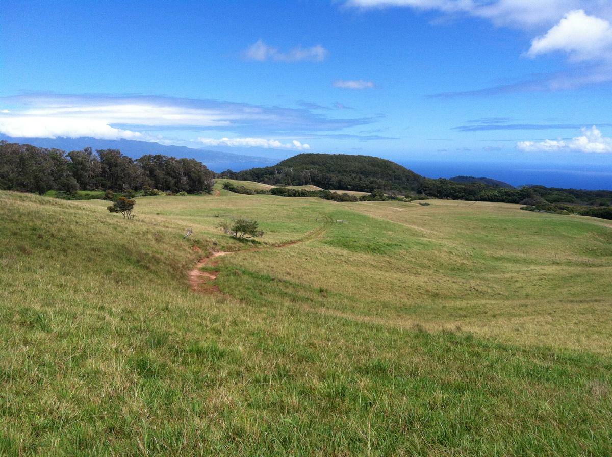 IMG_1316 pasture looking to puu ehu.jpg