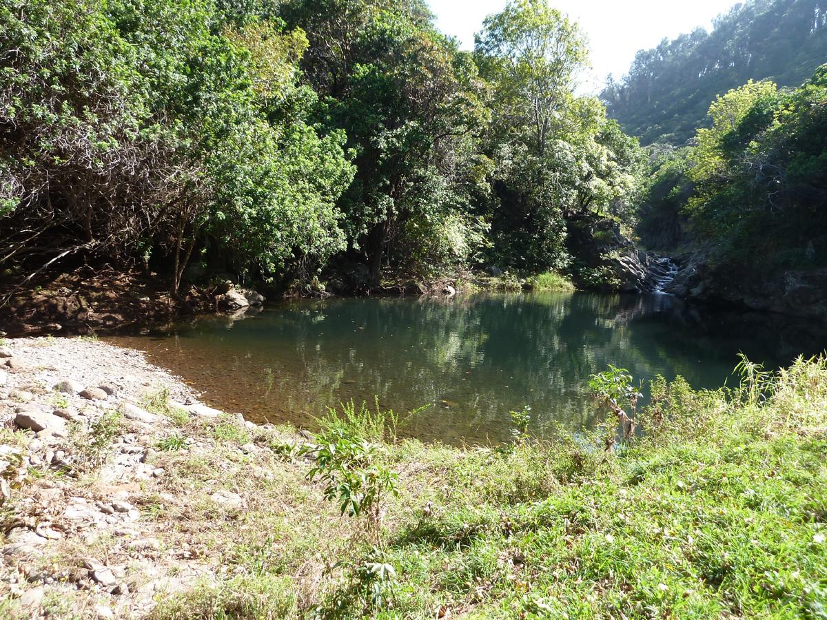 P1060310 -main pool from behind bushes copy.jpg