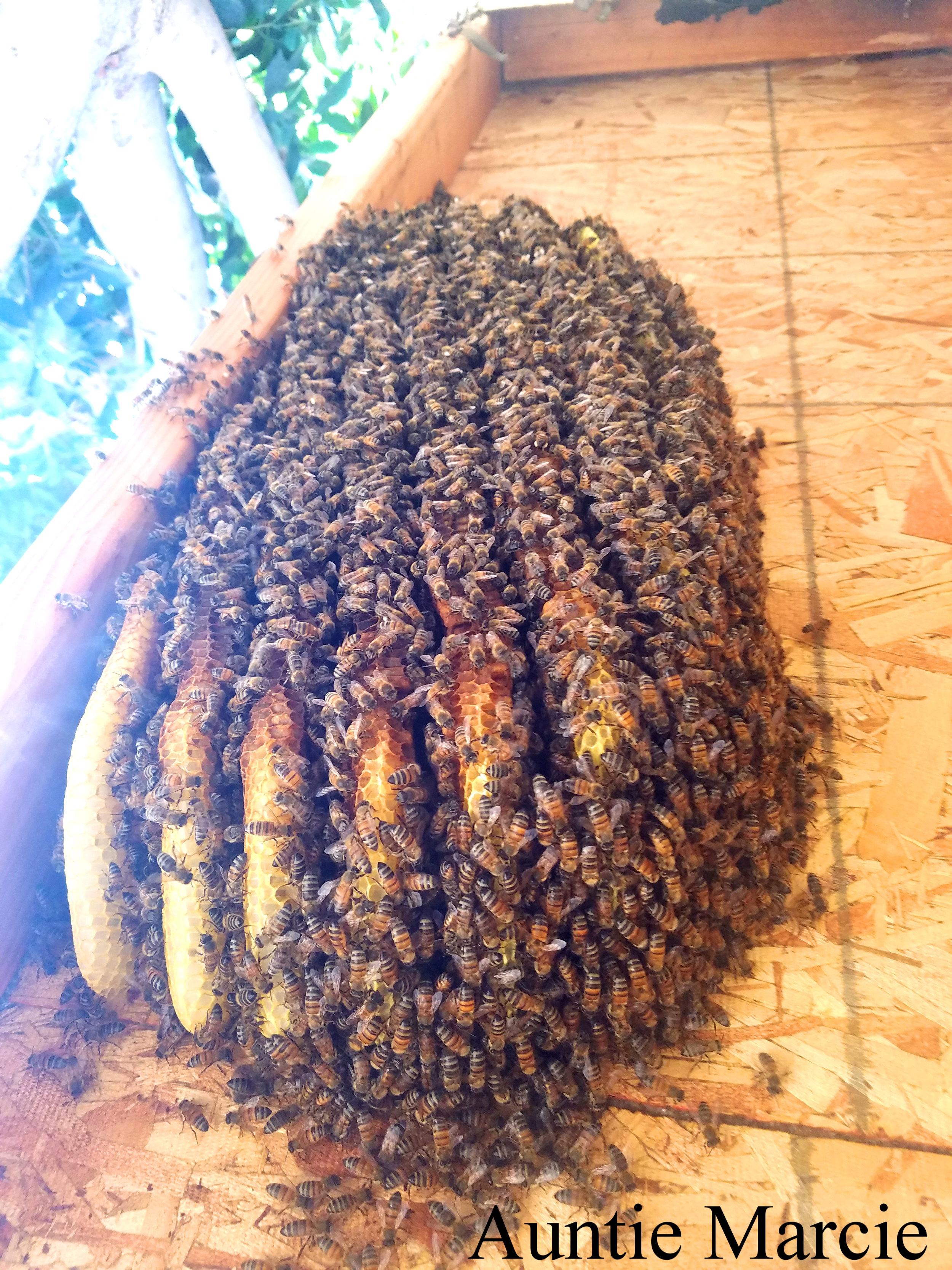 Honey and Bees Photo.jpg