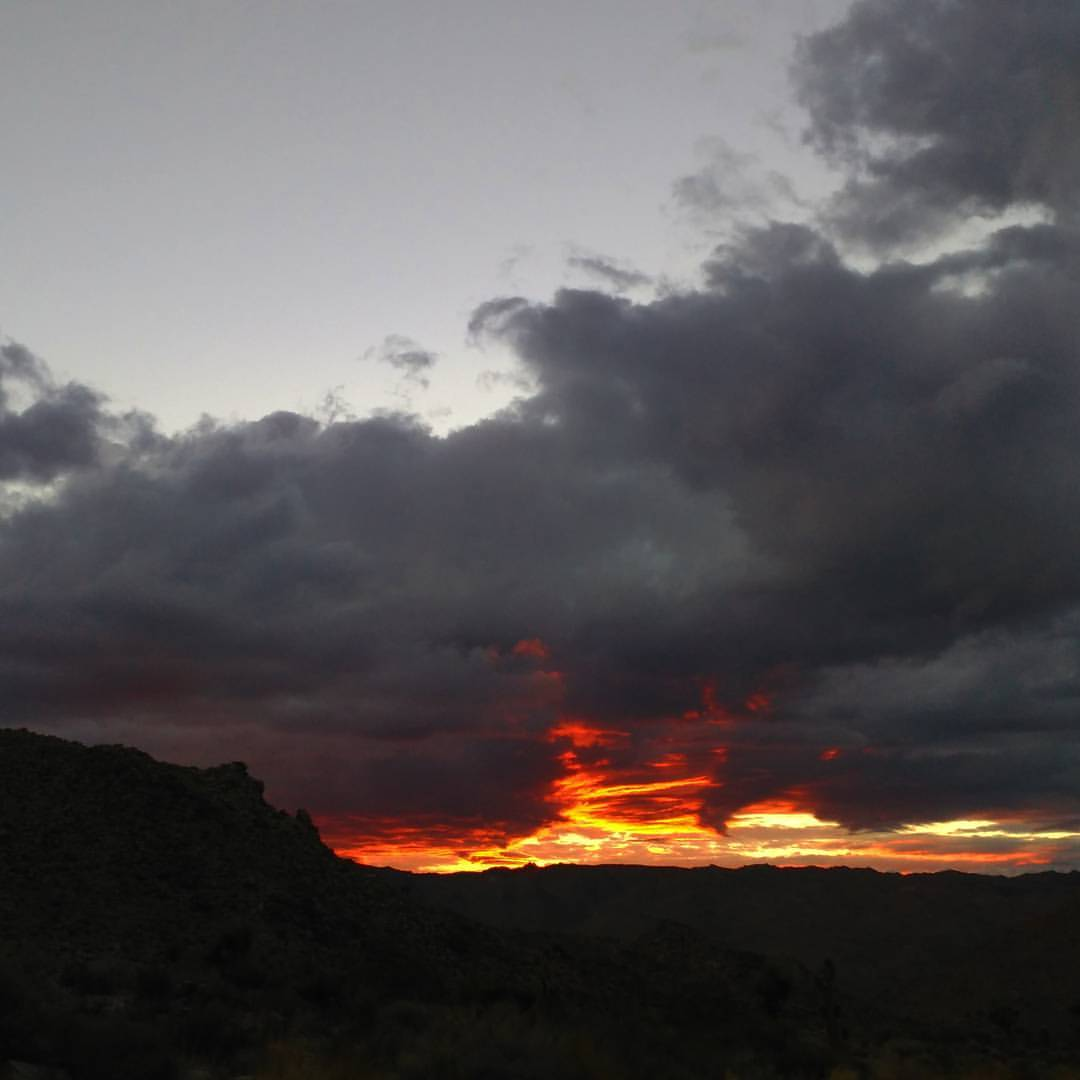 👻 (at Joshua Tree National Park)