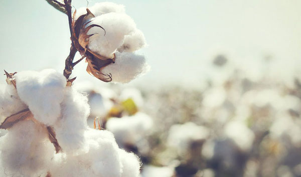 Cotton production can be just as bad as synthetic fiber production    (image source)