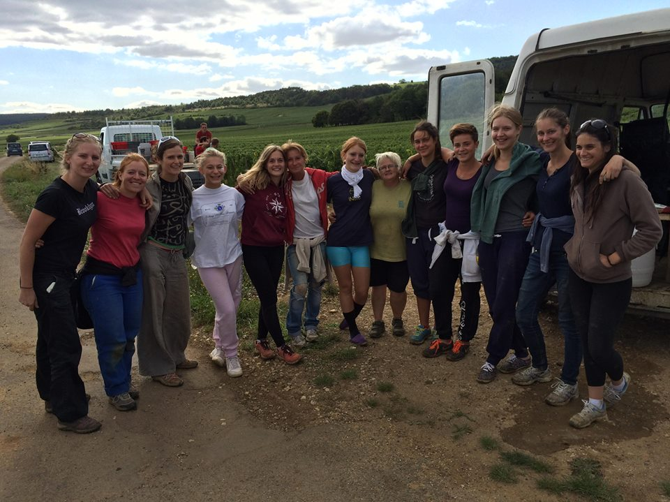 The all-female crew at Huber-Verdereau, picking today in Puligny-Montrachet