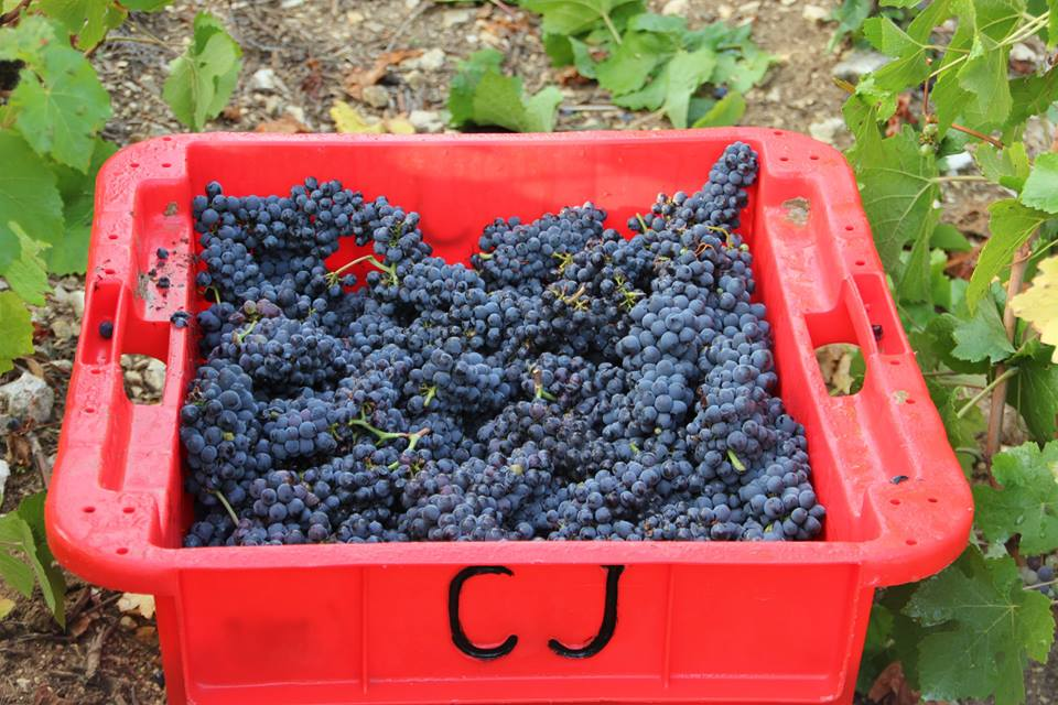 In the Aube, the Pinot is in at Jérôme Coessens in VIlle-sur-Arce