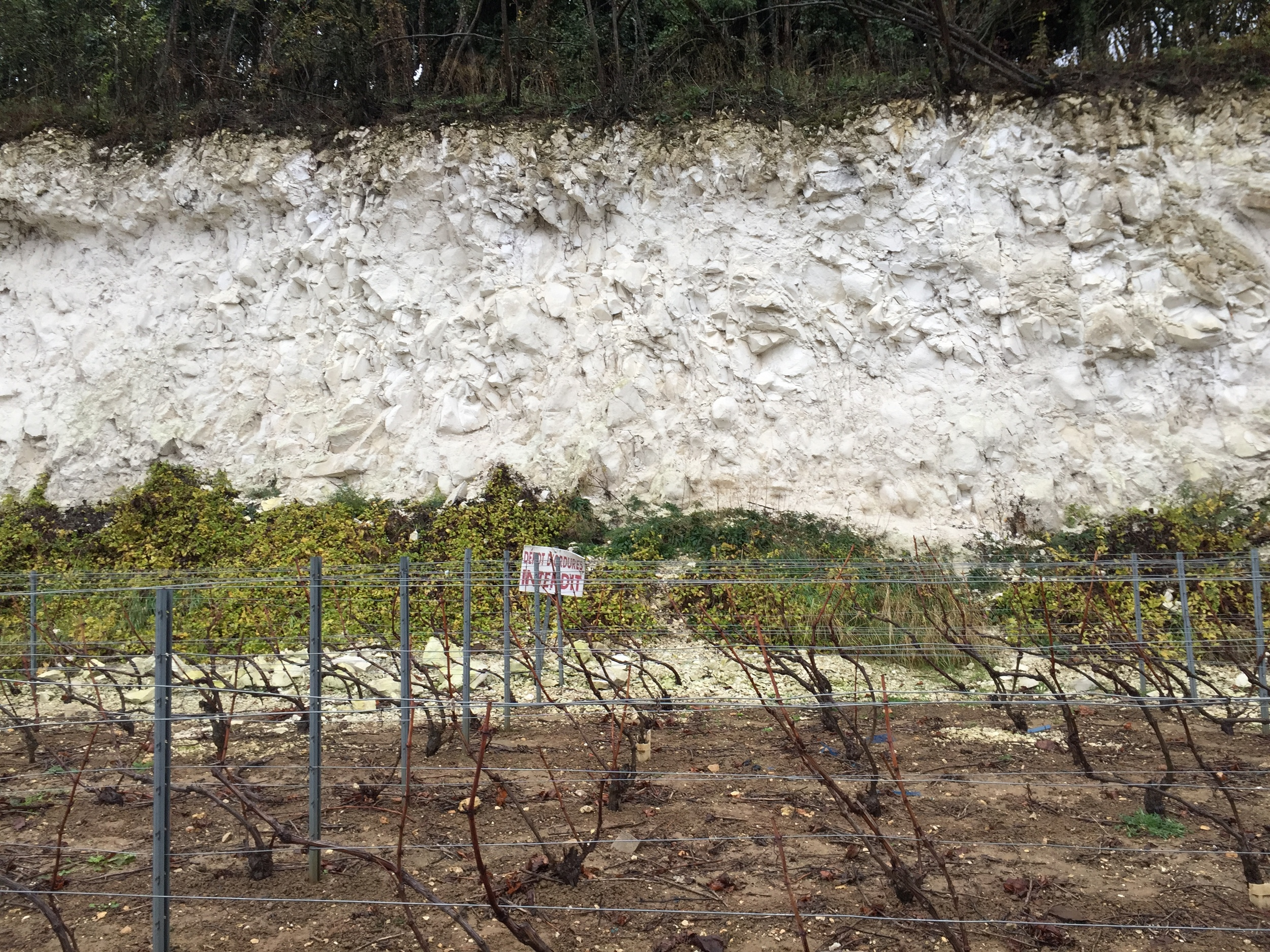 Champagne terroir exposed - an inch of topsoil, and then nothing but chalk on the hillsides of Hautvillers