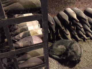 Magnums, Jeros, and Oban the dog, curled up in the cellar at Violot-Guillemard