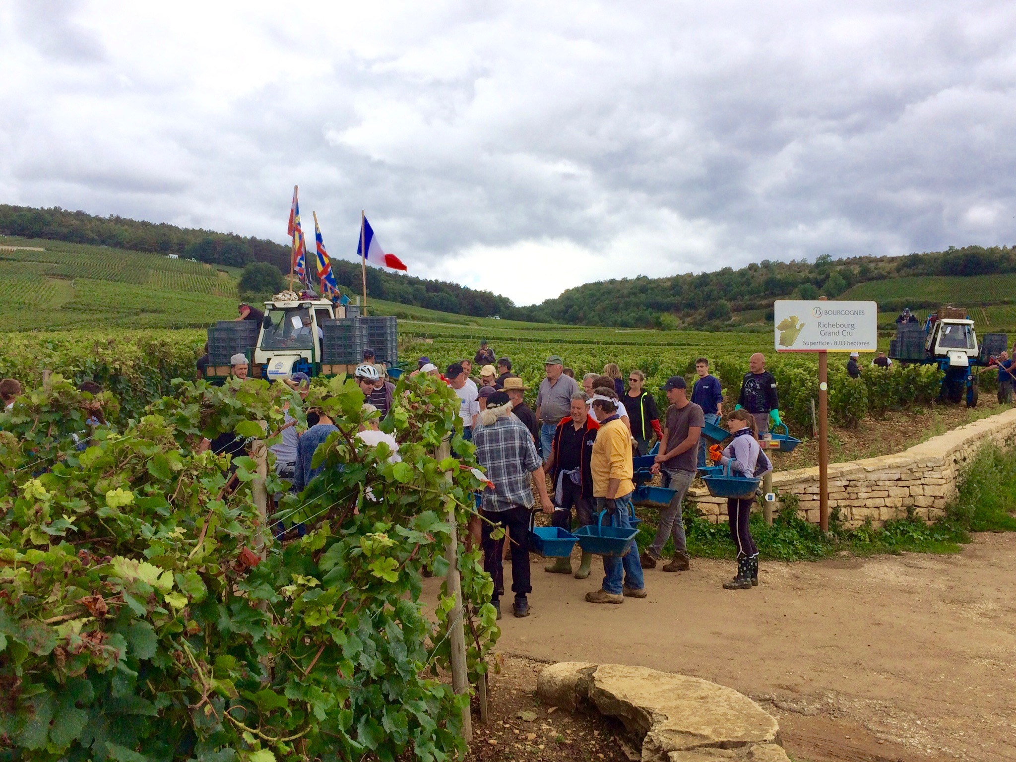 It's not every day you get to see the  DRC  crew picking  Richebourg
