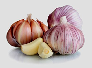 Garlic_bulb.jpg