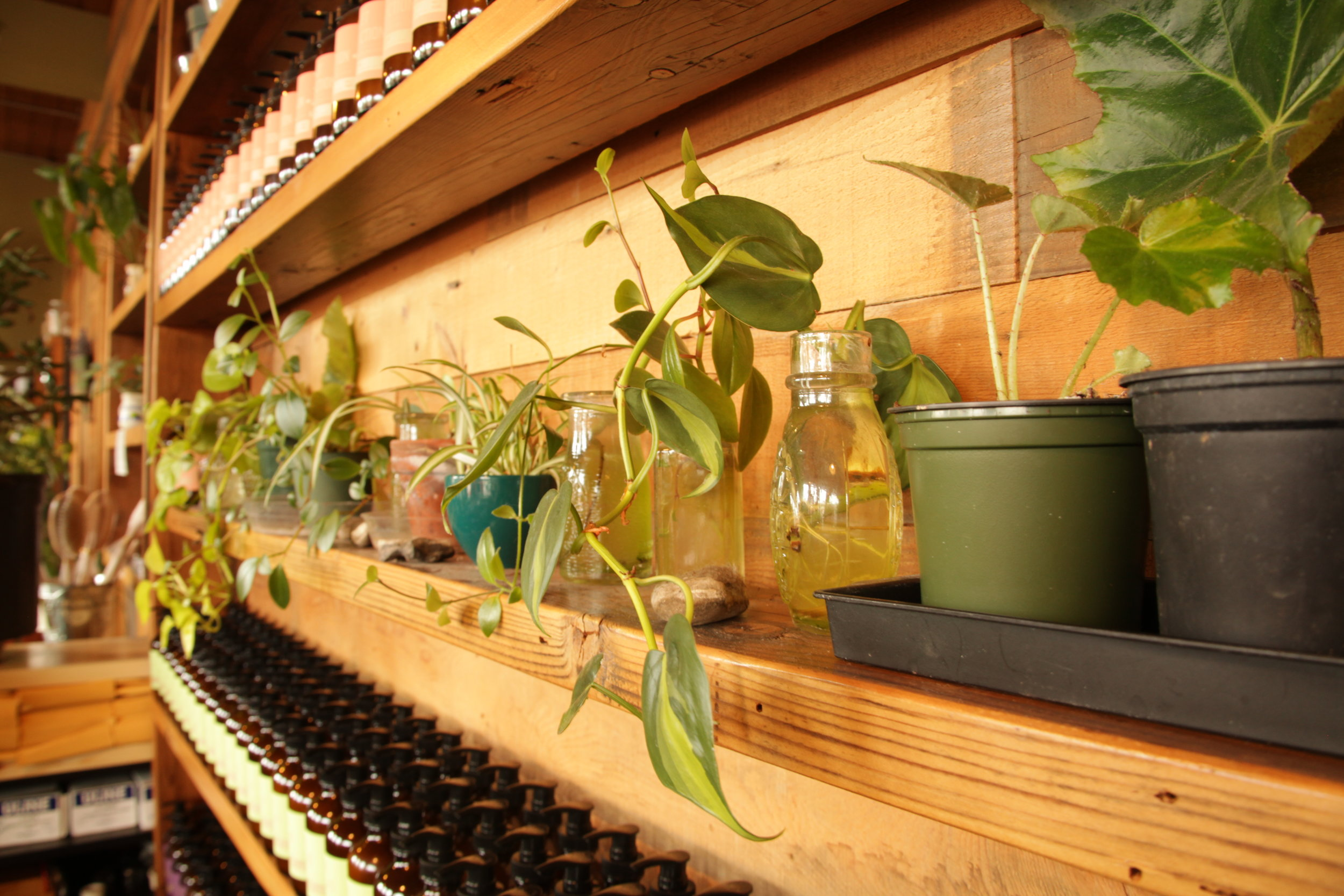 plantstarts.JPG