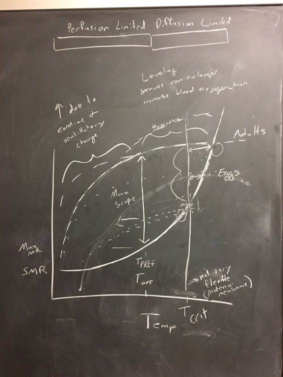 Original chalk-board drawings of our ideas