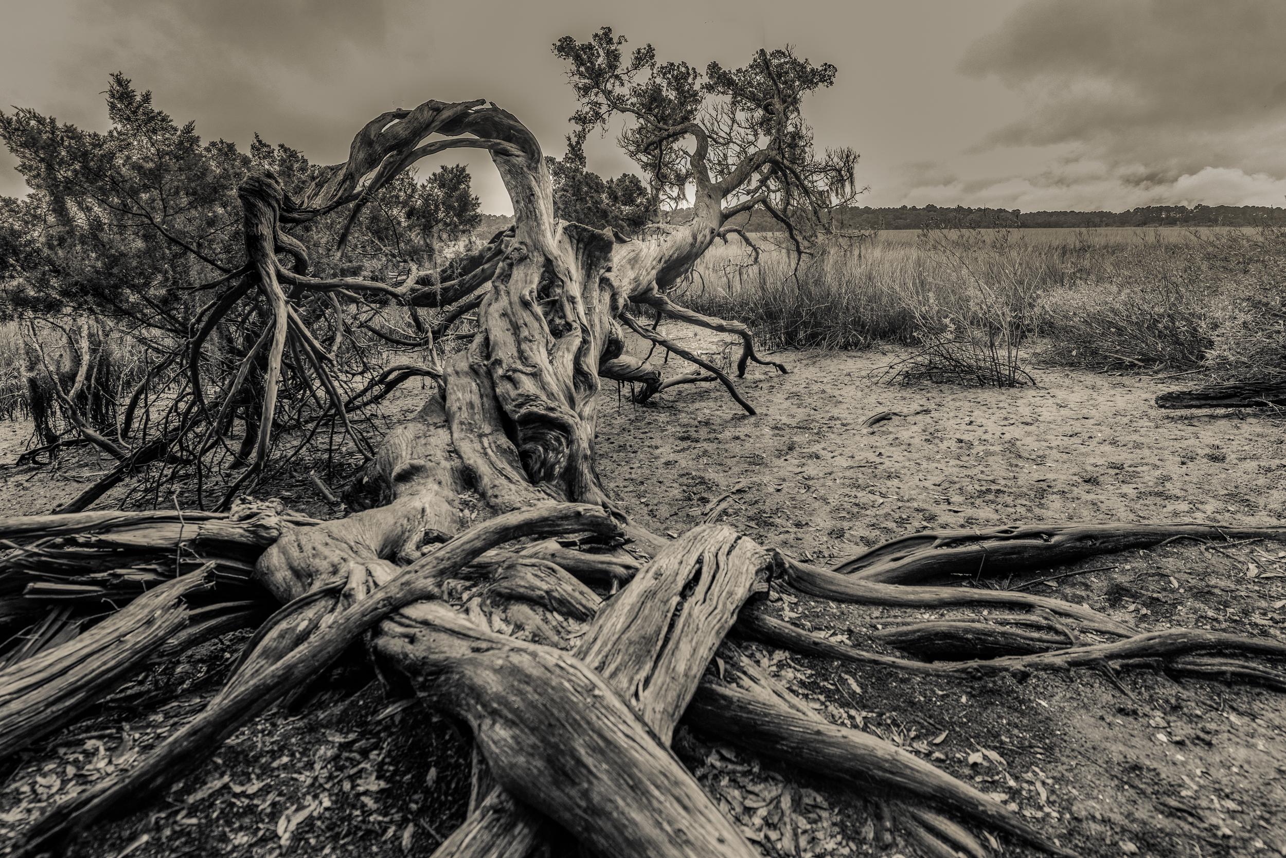 Bog Tree