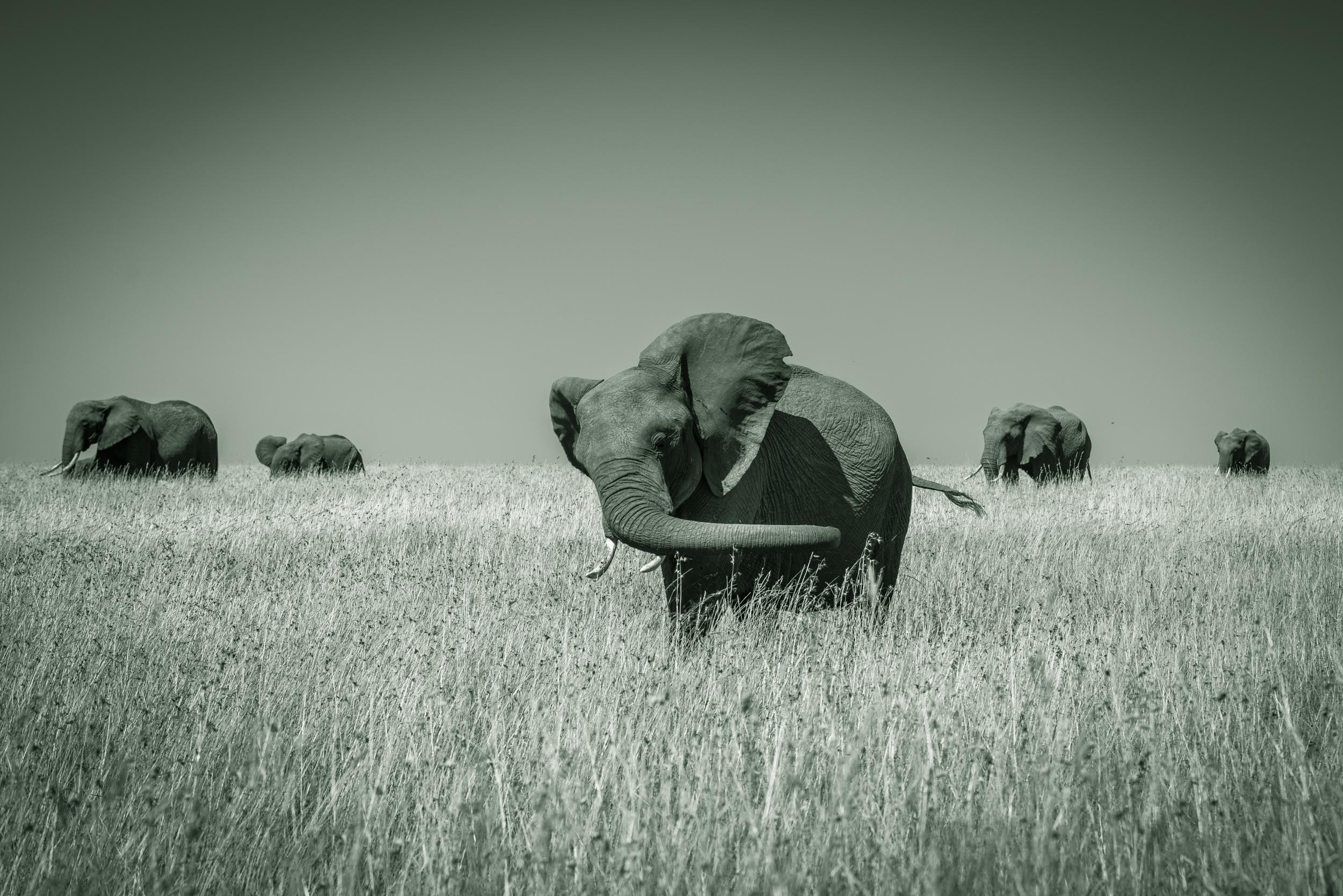 MasaiMara.D800E.20160304-96.1500px.jpg