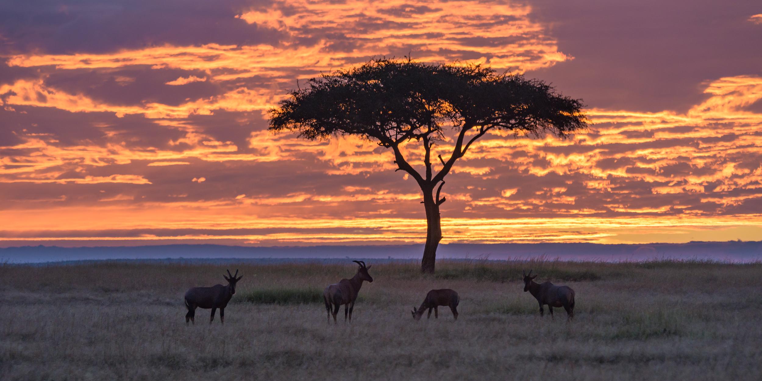 MasaiMara.D800E.20150302-342.1500px.jpg