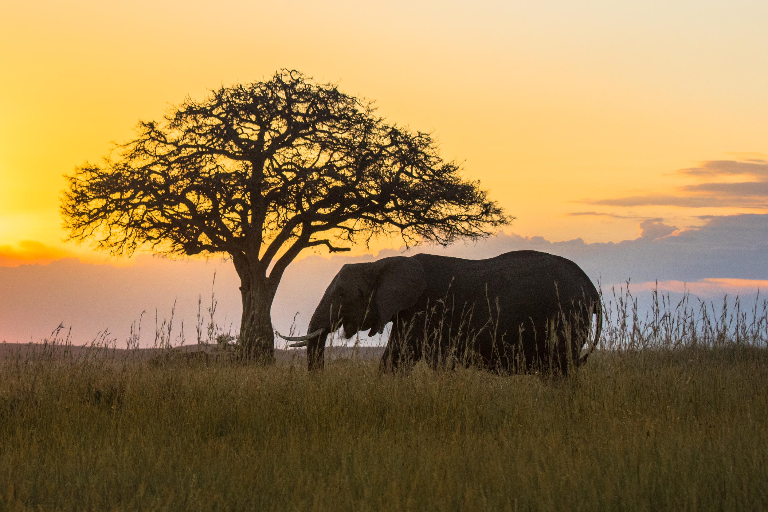 MasaiMara.D810.20150301-525.1500px.jpg