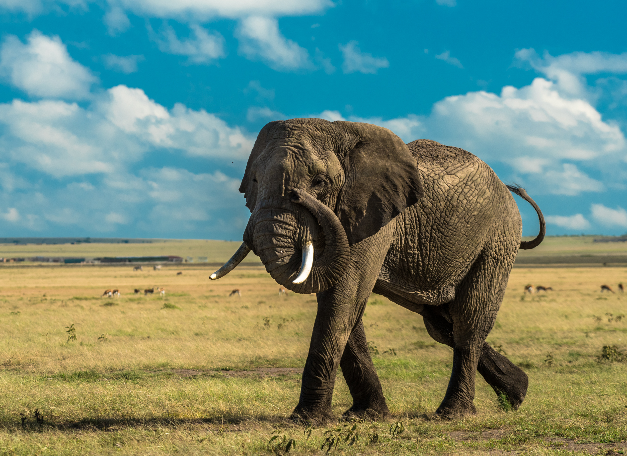 MasaiMara.D810.20150301-313.1500px.jpg