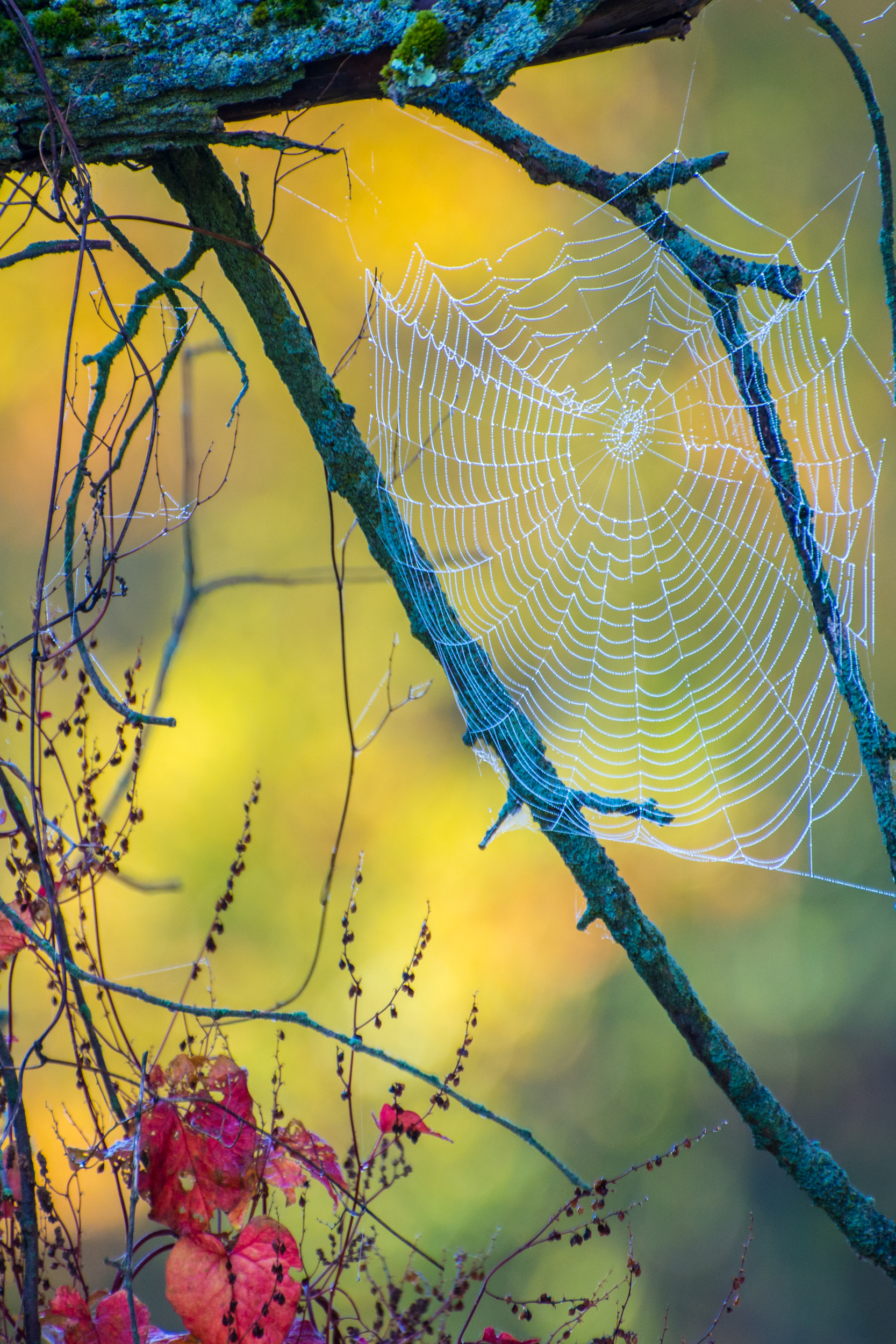 Morning dew on a spiderweb in Rochester, Vermont