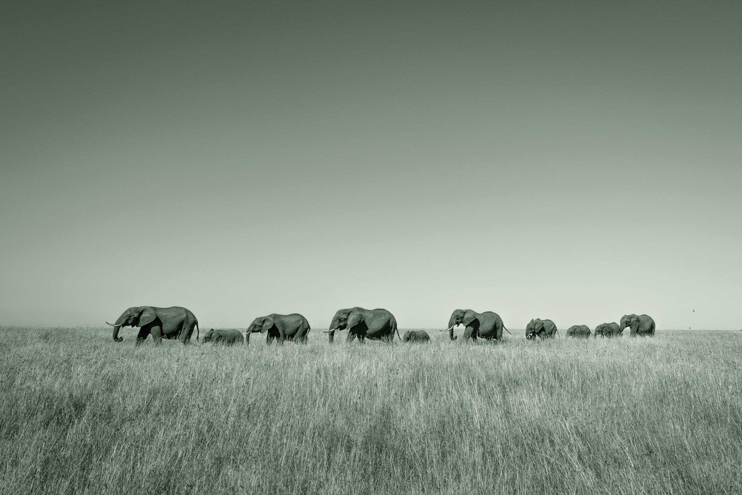 A herd of elephants walk in line towards a nearby watering hole