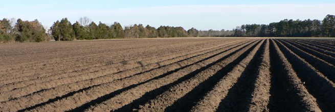 furrows by crowdive, on Flickr