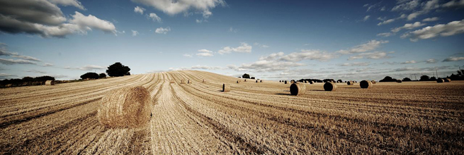 Harvest by tricky (rick harrison), on Flickr