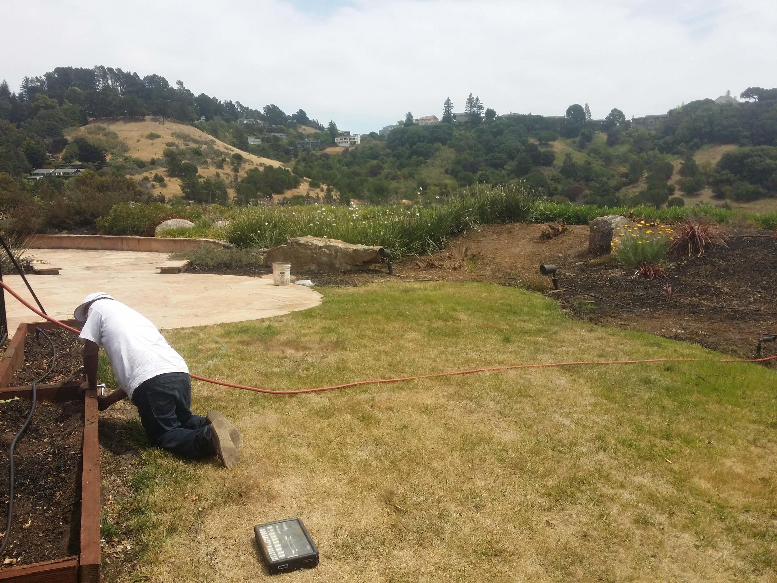 Zen Garden Design - Mill Valley Landscape Architect
