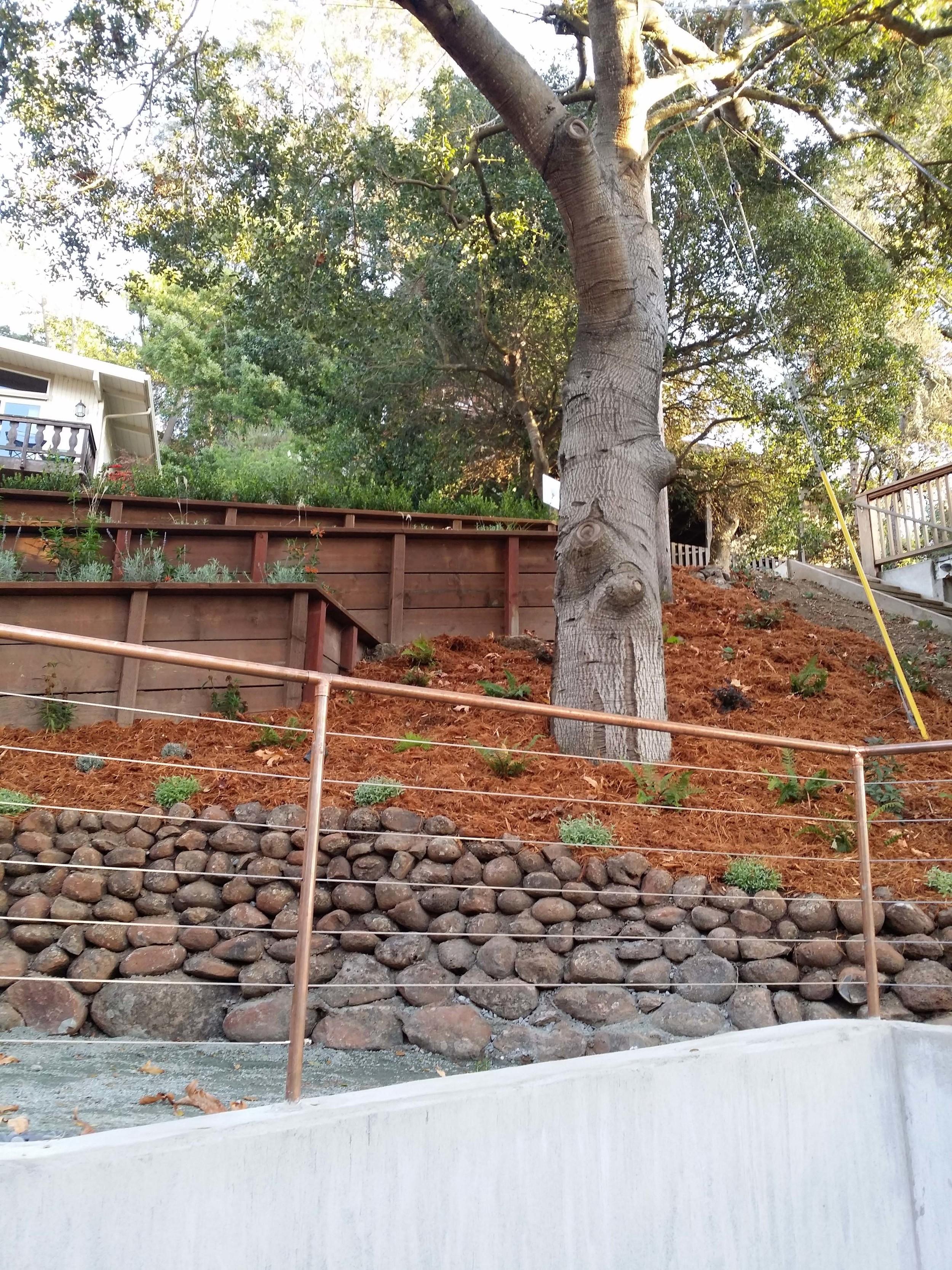 Marin Landscape Garden