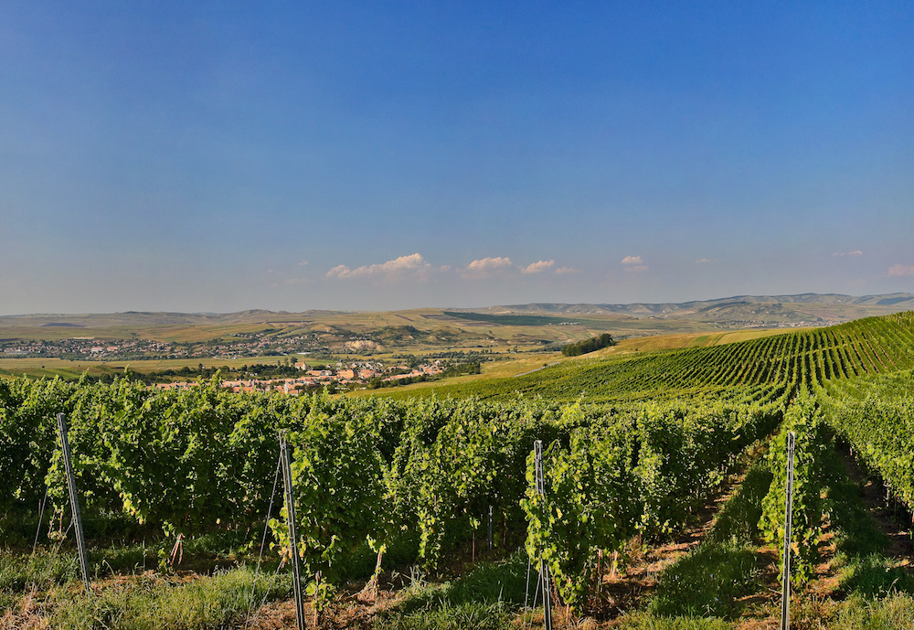 Vineyards in Weinland