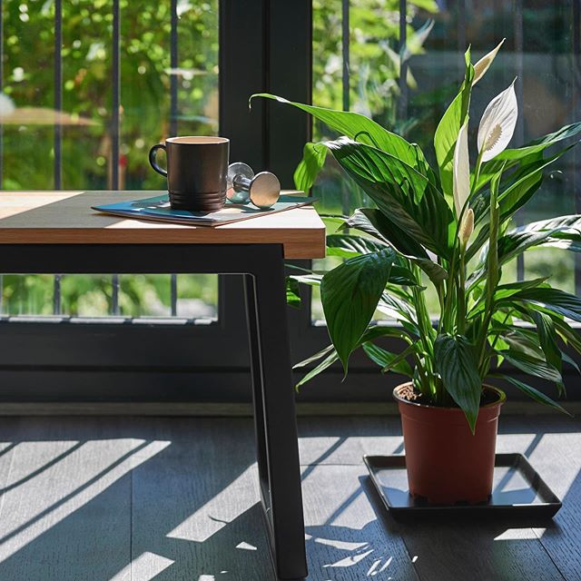 Create some inspiring green spaces with Another Brand.  Follow the link in bio for further inspiration on cultivating indoor greenery with advice from design-led interior planting studio @studio.roco.  #houseplants #airpurifyingplants #stylingwithplants #interiors #furniture #design #home #anotherbranduk #shelving #woodfurniture #minijungle #RootNurtureGrow #HouseofPlants #propagationstation #indoorgarden #propagation #indoorgardening #plantgang #succulents #tropicalplants