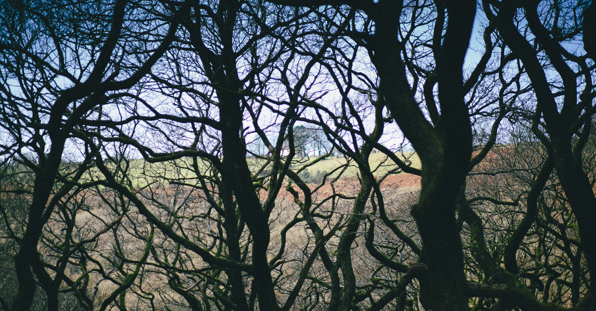 Looking out from Blackmills Wood, the study setting for Rob's Mametz Wood.