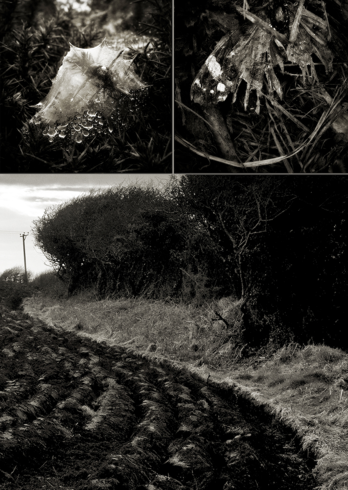 The Dowrog, Pembrokeshire