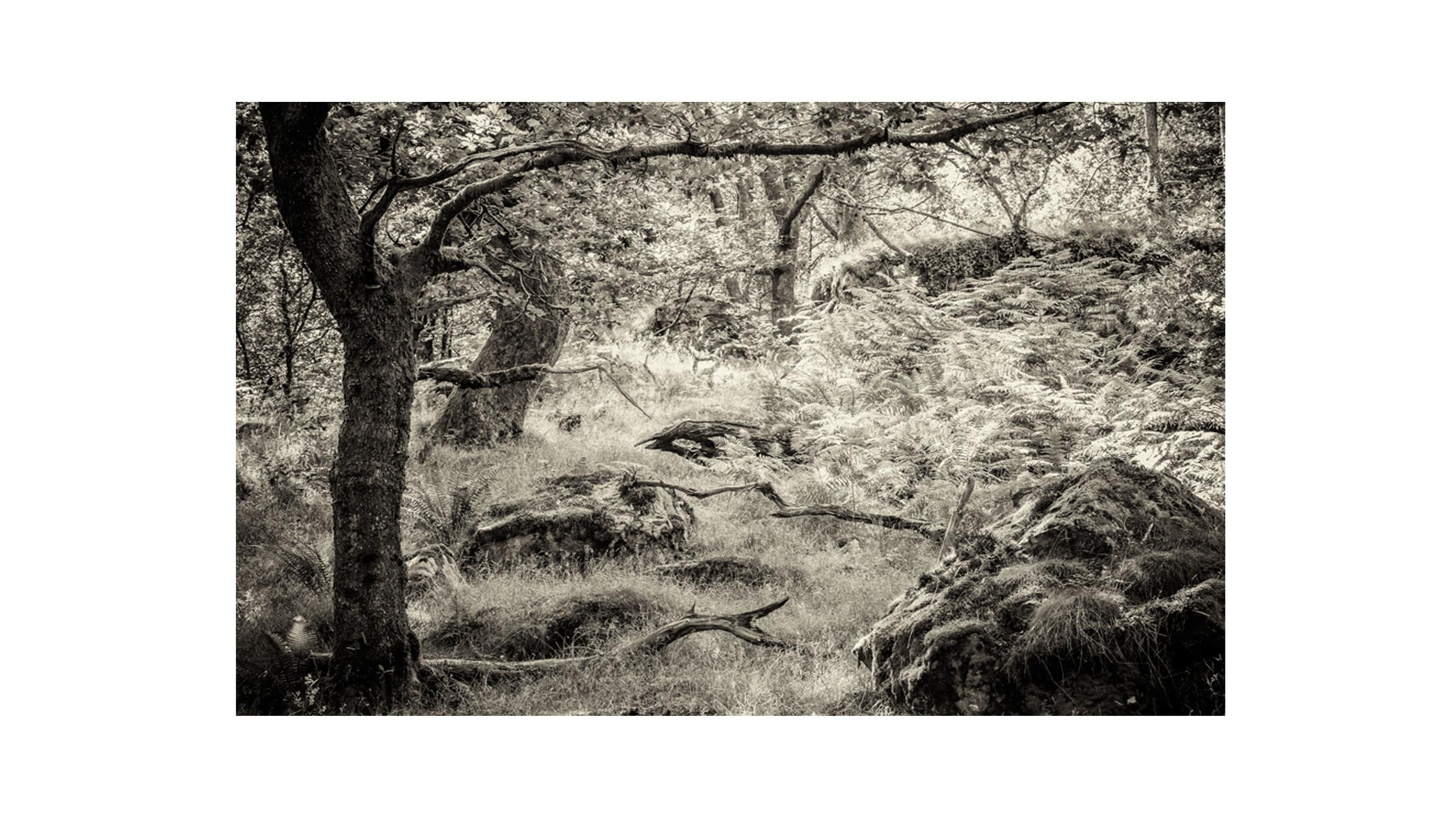 Nedd Valley Exhibition 5.jpg