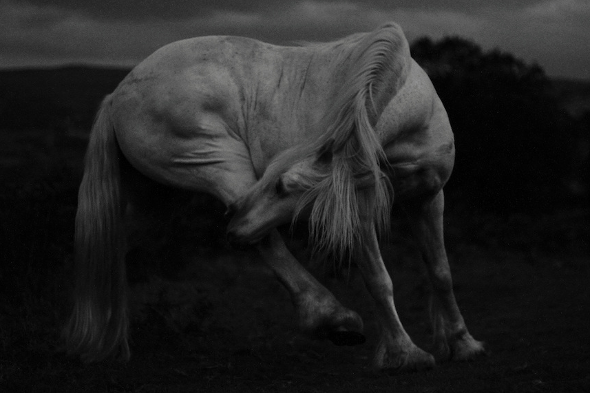 From 'Mountain Ponies at Night' © 2015 Craig Redmond