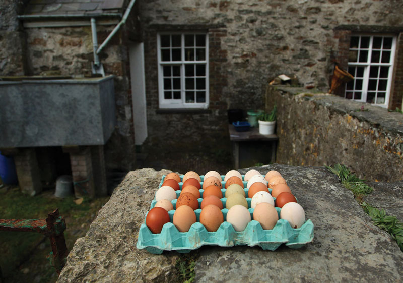 Eggs at Dynogoch, Bardsey Island