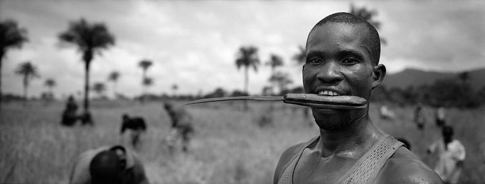 Sierra Leone, Harvest