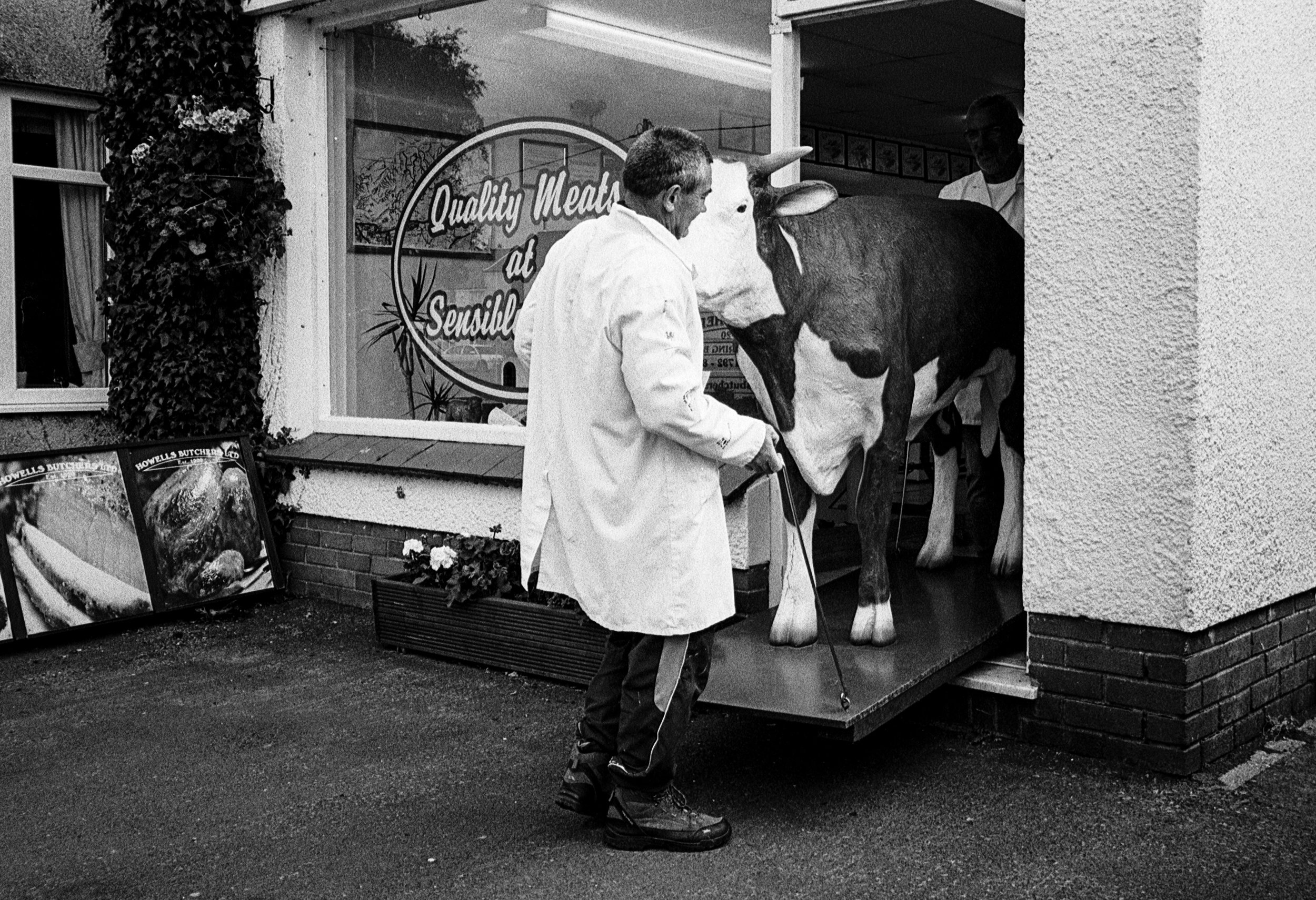 Sirloin the Cow. © Matt Eynon