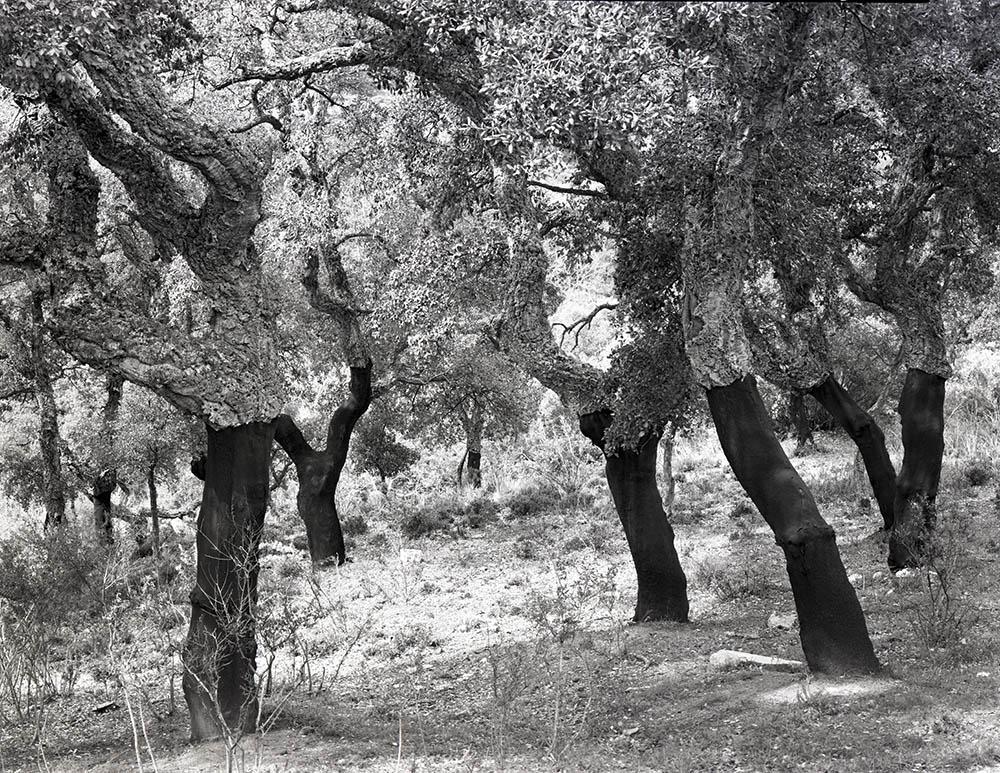 Barbagia, Sardinia, 2000