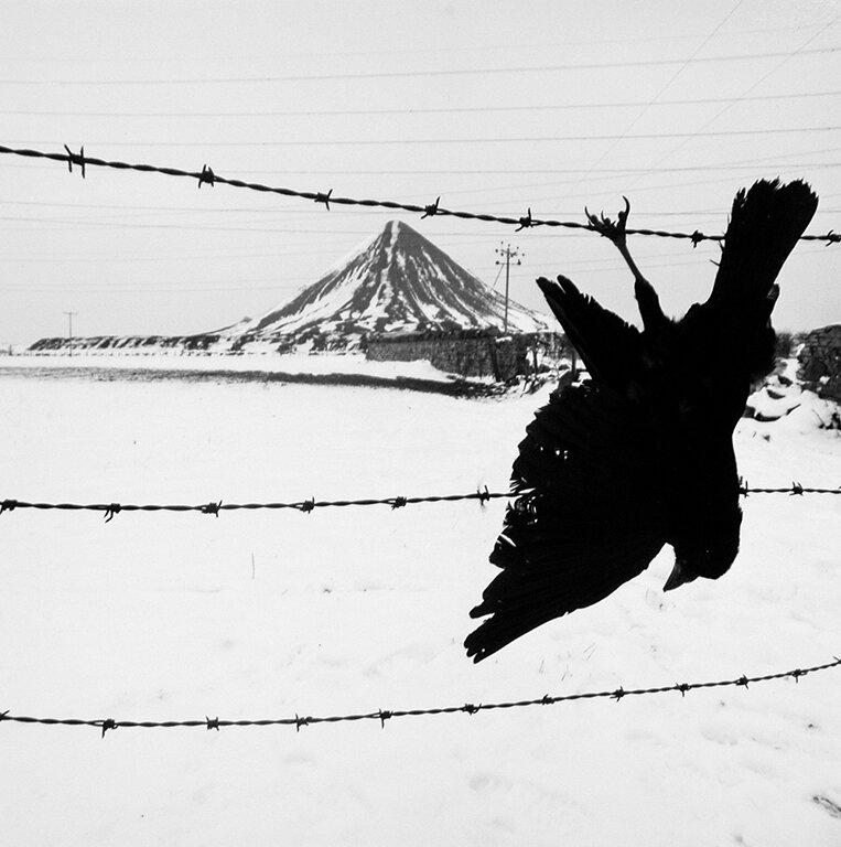 Shot Crow, 1986