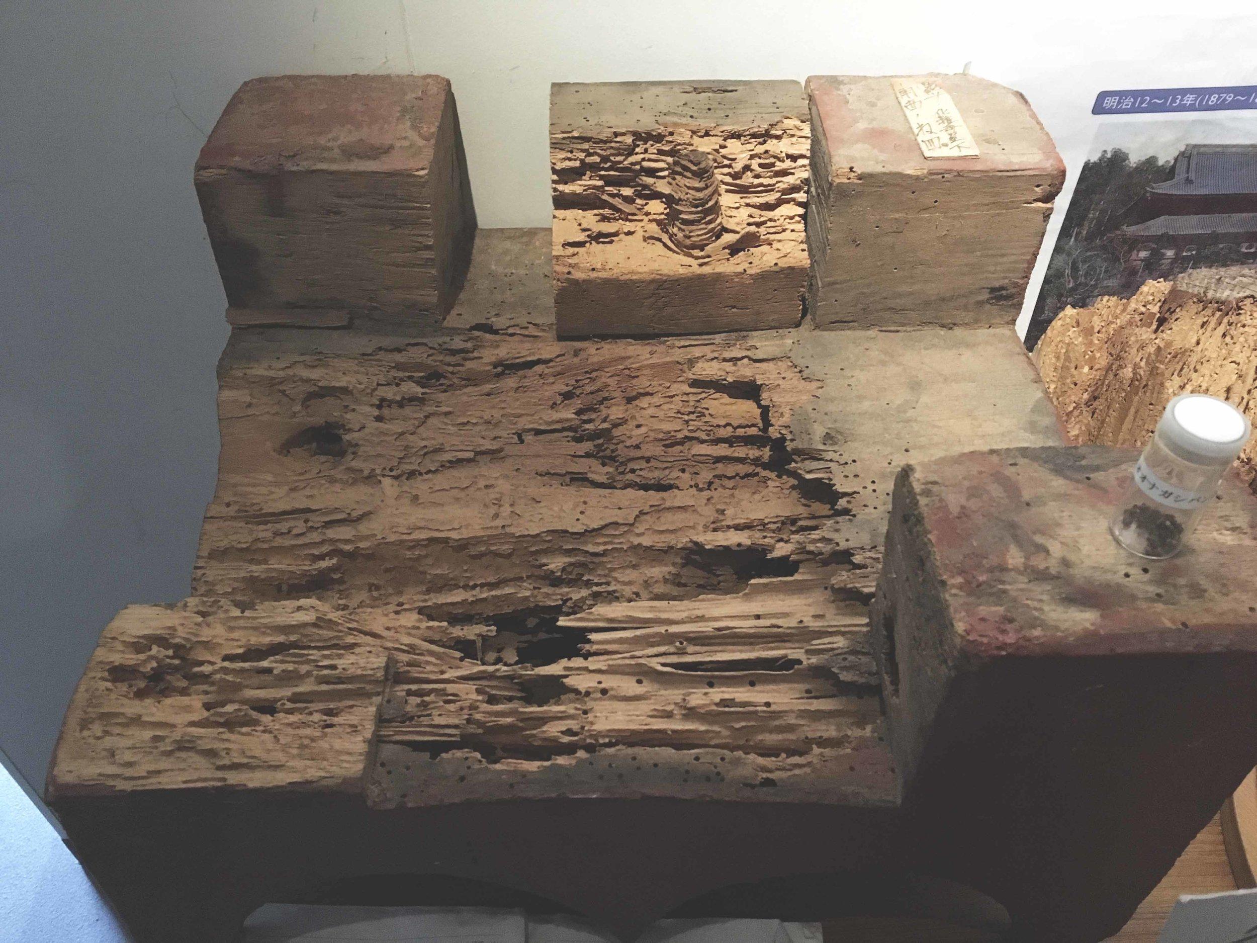 Uma amostra de como a madeira, que faz parte da estrutura do templo, estava danificada pelos cupins.