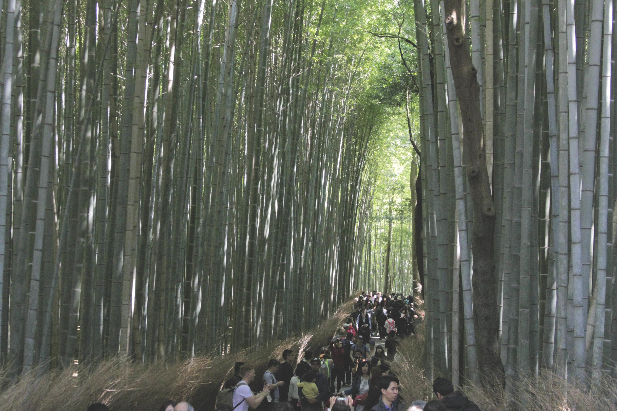Caminho que corta a floresta de bambus de Arashiyama