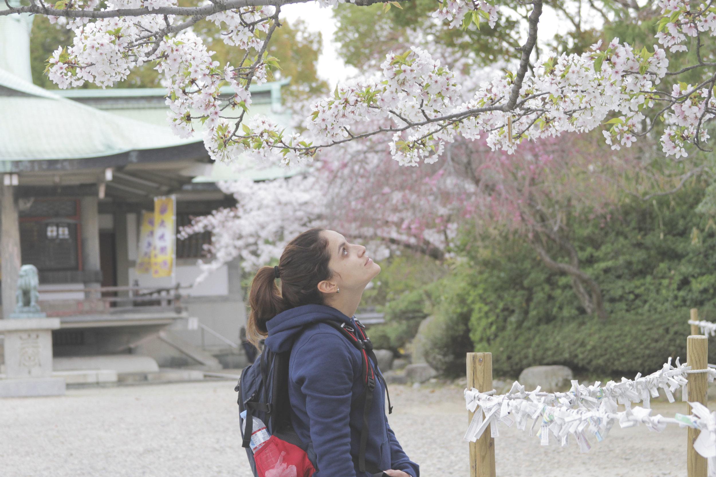 jardim_castelo_sakuras.jpg