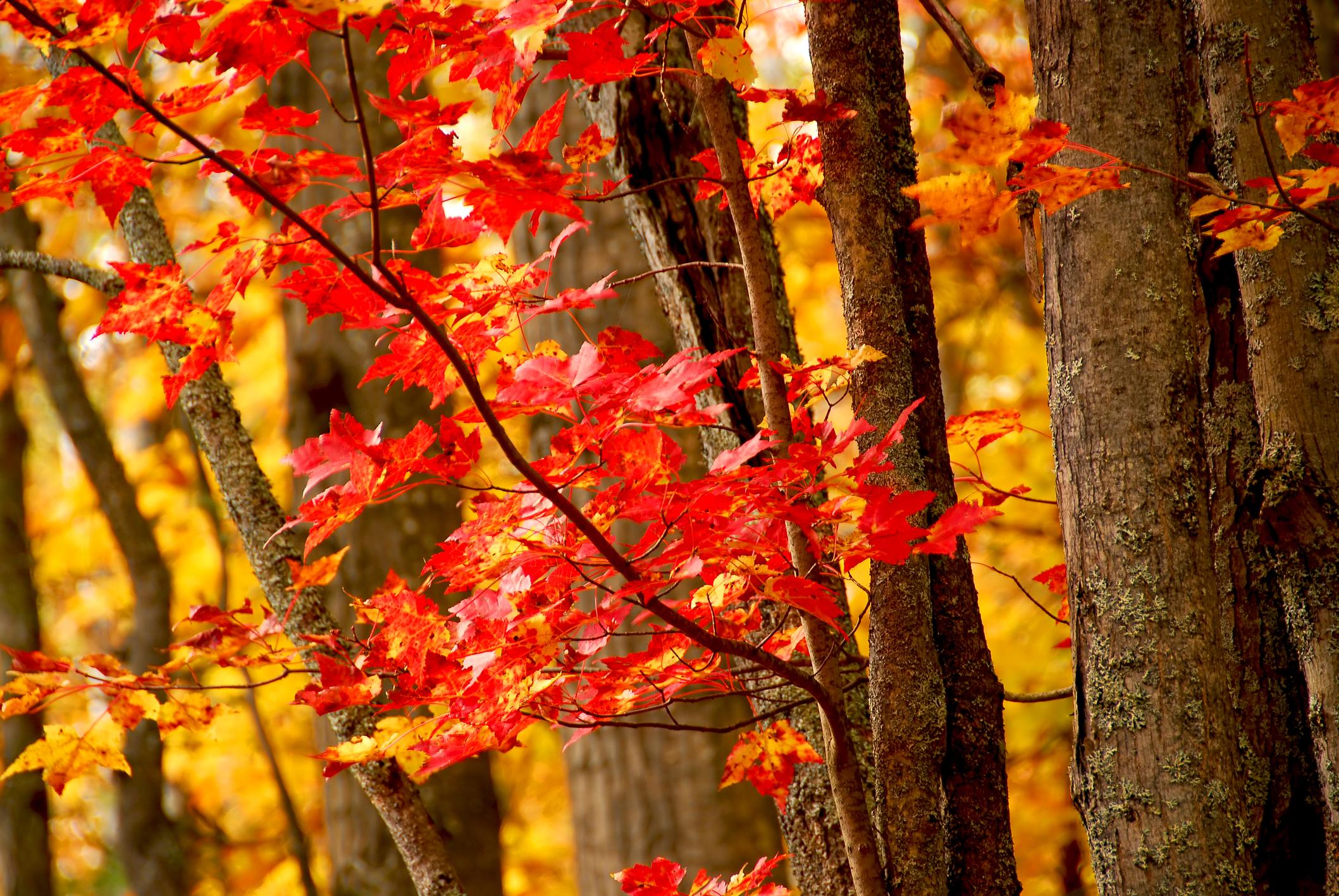 fall_woods