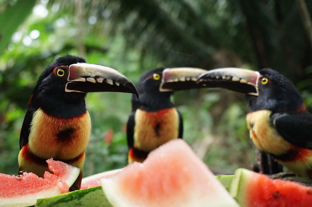 birds-at-breakfast.jpg
