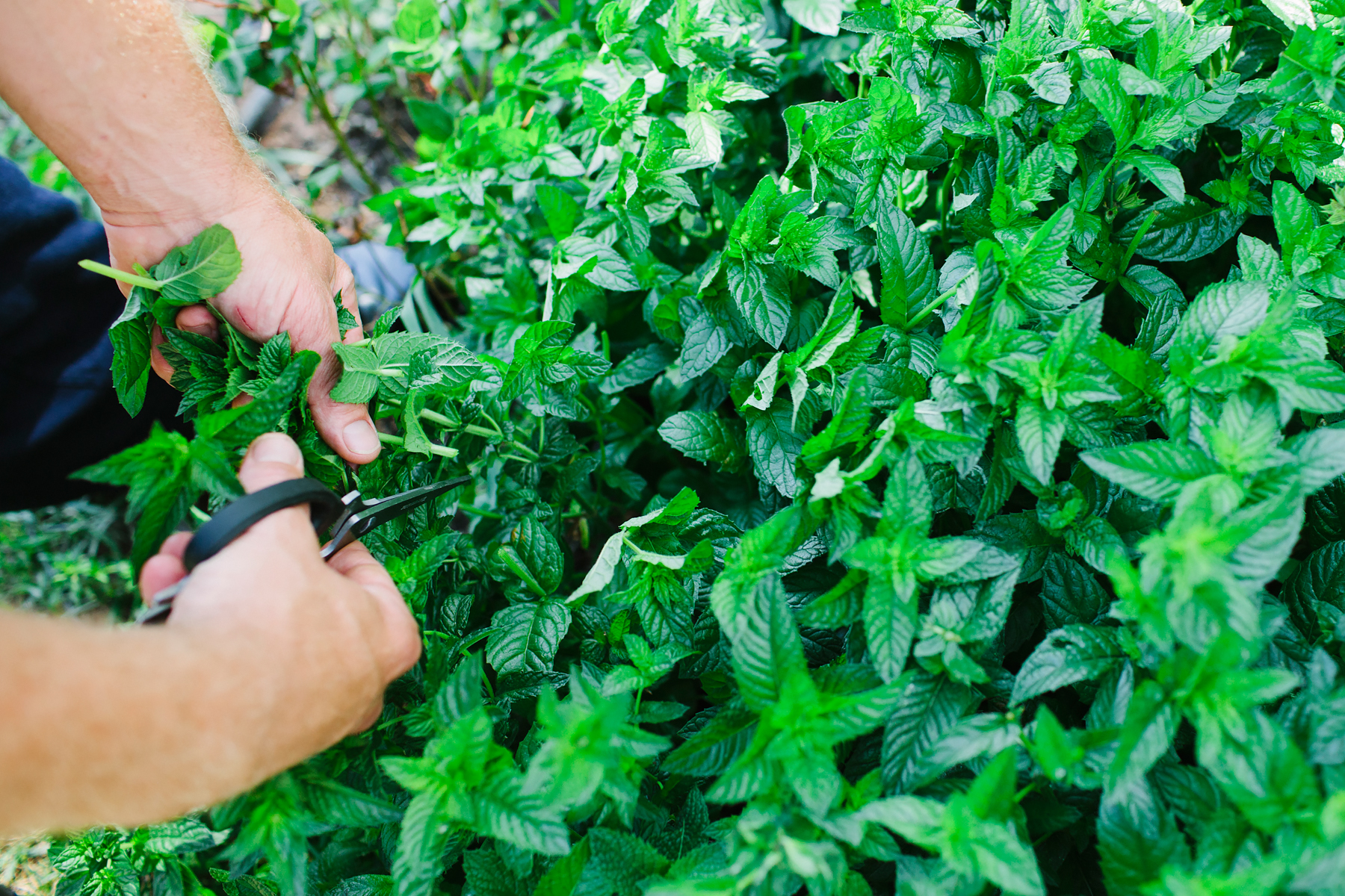 Vin48-Fresh-Herbs-01.jpg