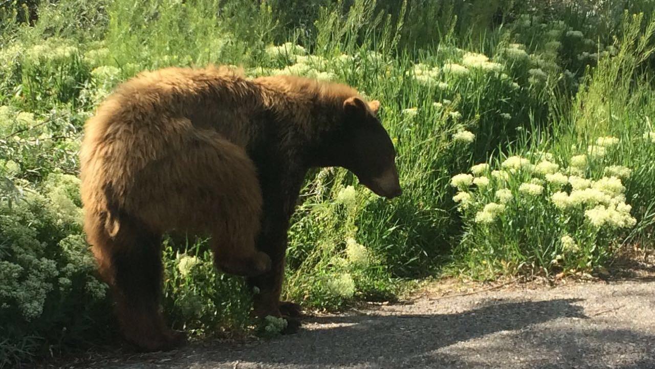 Yes, bears go pee pee too! 🐻