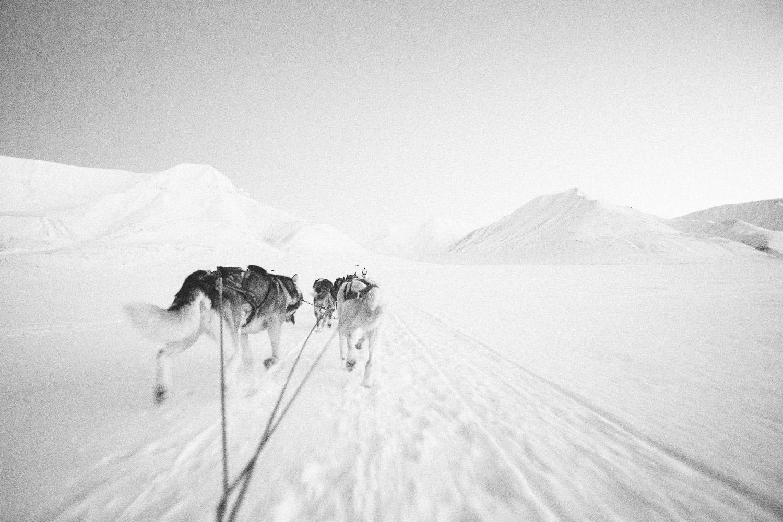 Dog Sledding outsideSvalbard, Longyearbyen, Norway. Minimalistic arctic nature.
