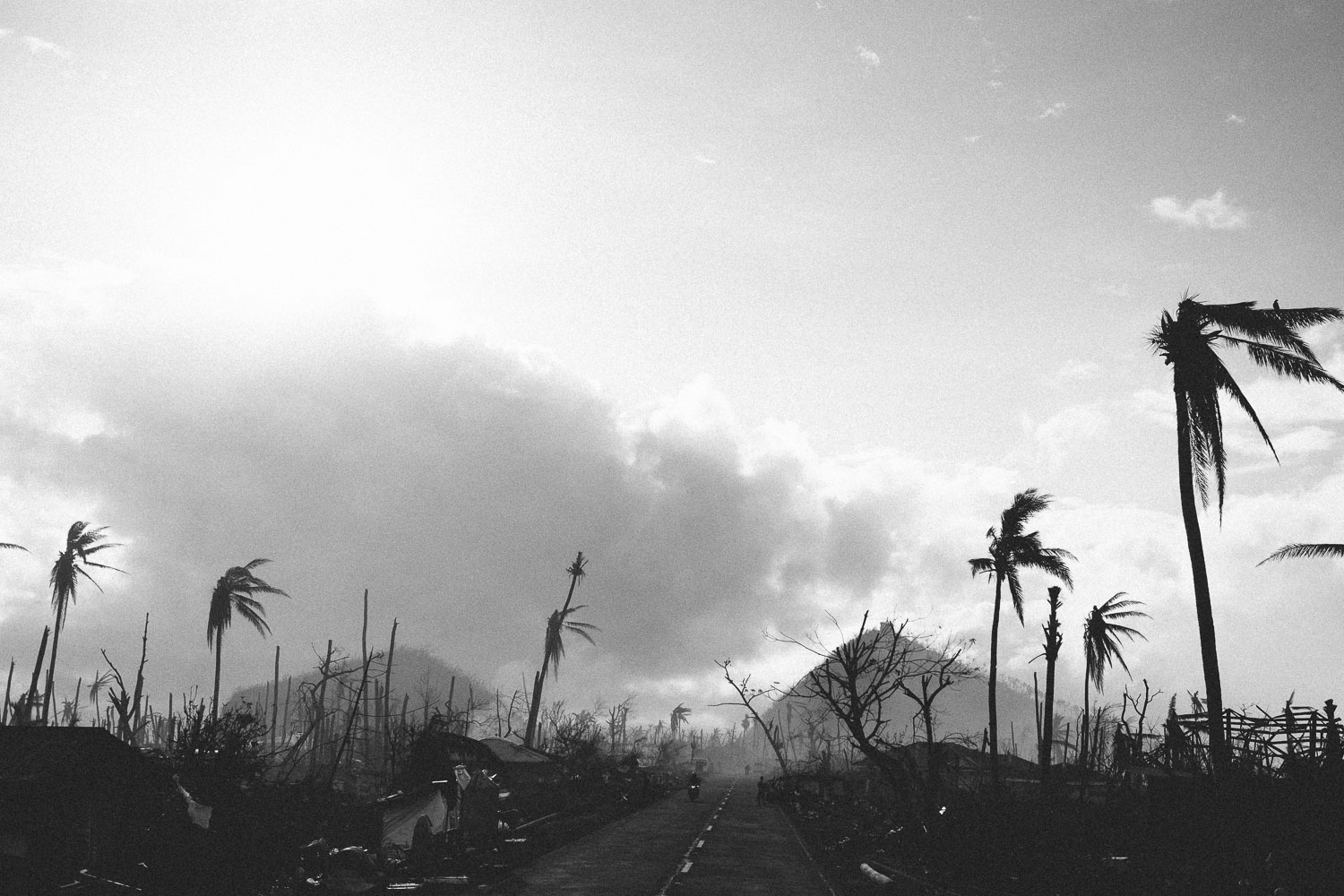 Village of Tolosa, Leyte Province, Philippines. The second site where Typhoon Haiyan (Yolanda) made landfall. With sustained wind speeds of 250 km/t vast areas of coconut farming were destroyed leaving an apocalyptic wasteland behind.