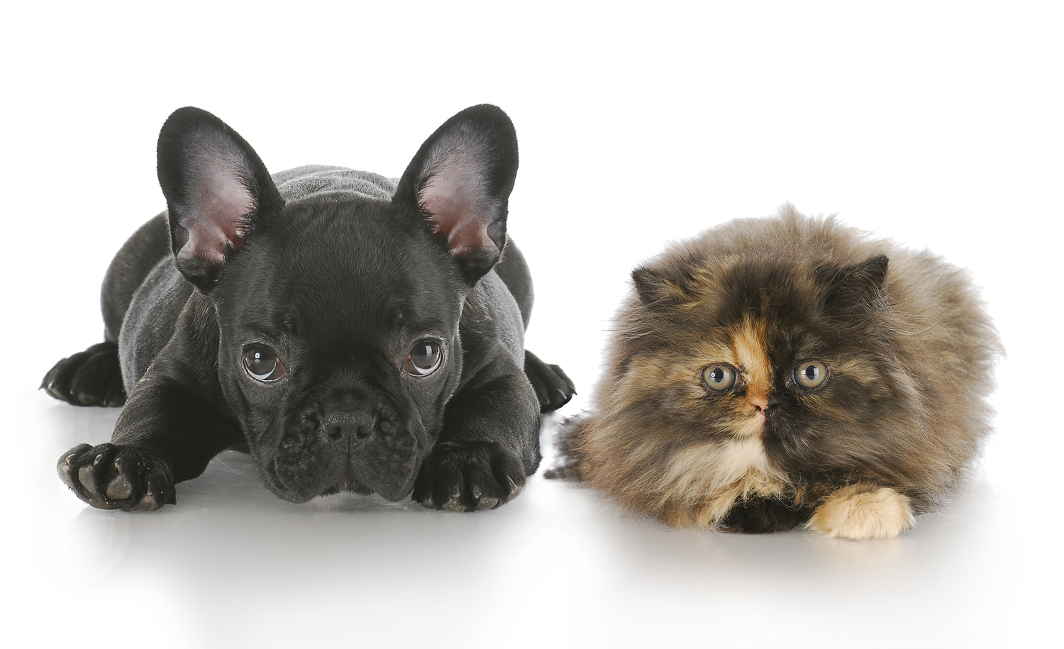 bigstock_Puppy_And_Kitten_Laying_Down_9884936.jpg
