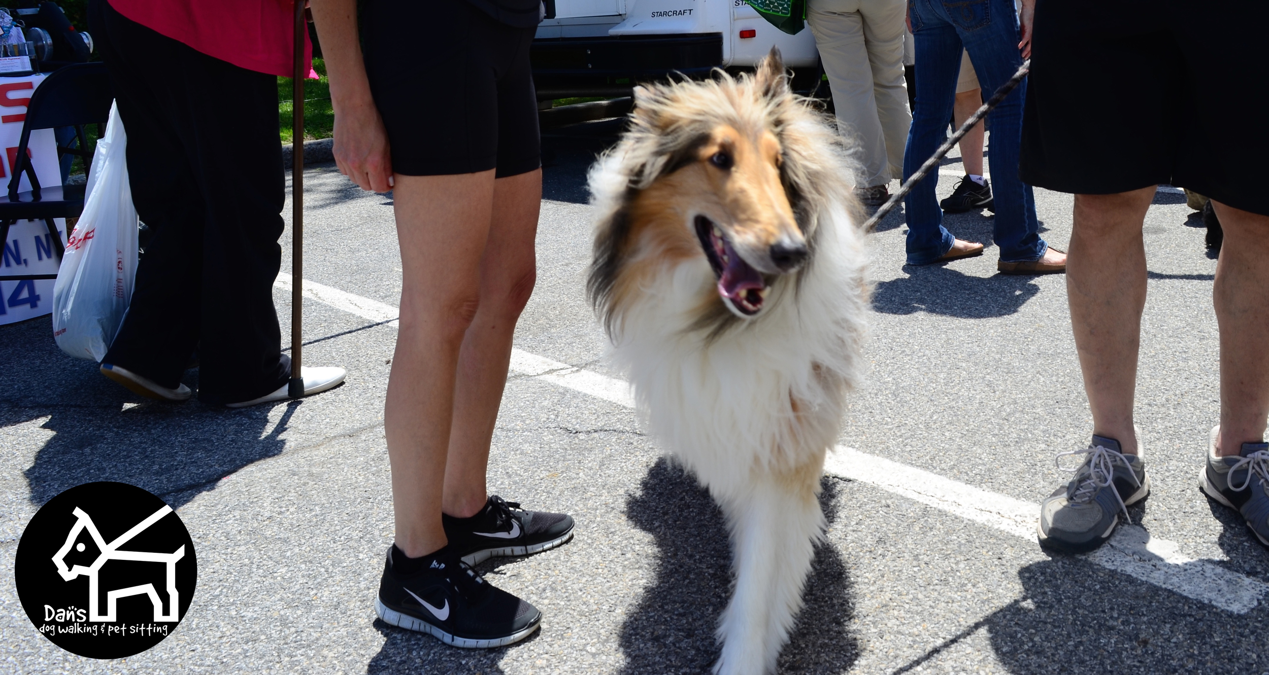 Beautiful Pup at Dan's Dog Walking and Pet Sitting Doggie Photo Booth at Harbor Fest 2015.jpg
