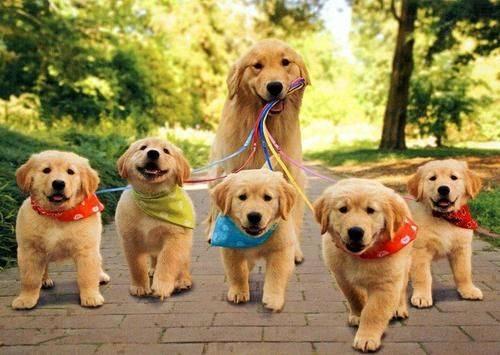 Importance of Daily Walks — Dan's Dog Walking and Pet Sitting